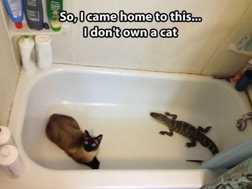 wtf strange Cats funny aligator - 7724306432