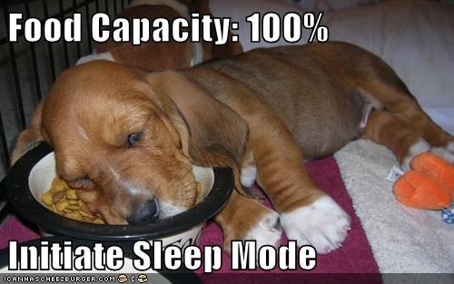 dog food,puppy,sleep,funny