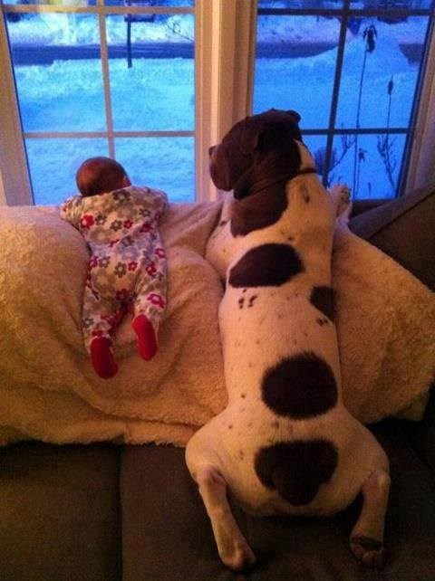 Babies dogs cute parenting funny - 7724321280