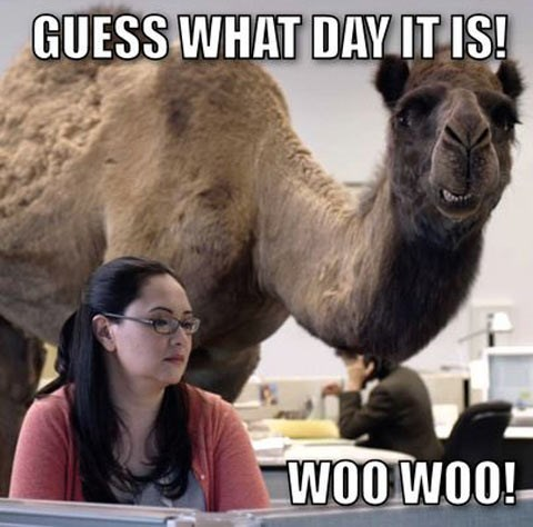 hump day camel woo funny - 7724389632