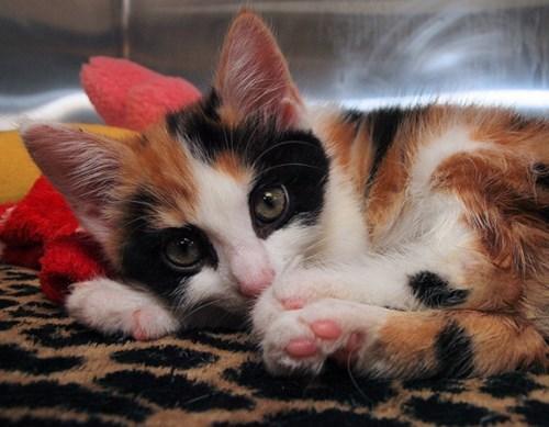 mask ball kitten cute masquerade - 7724530688