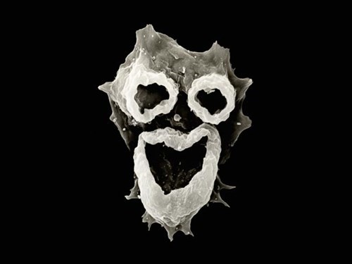 scary amoeba medicine science biology funny