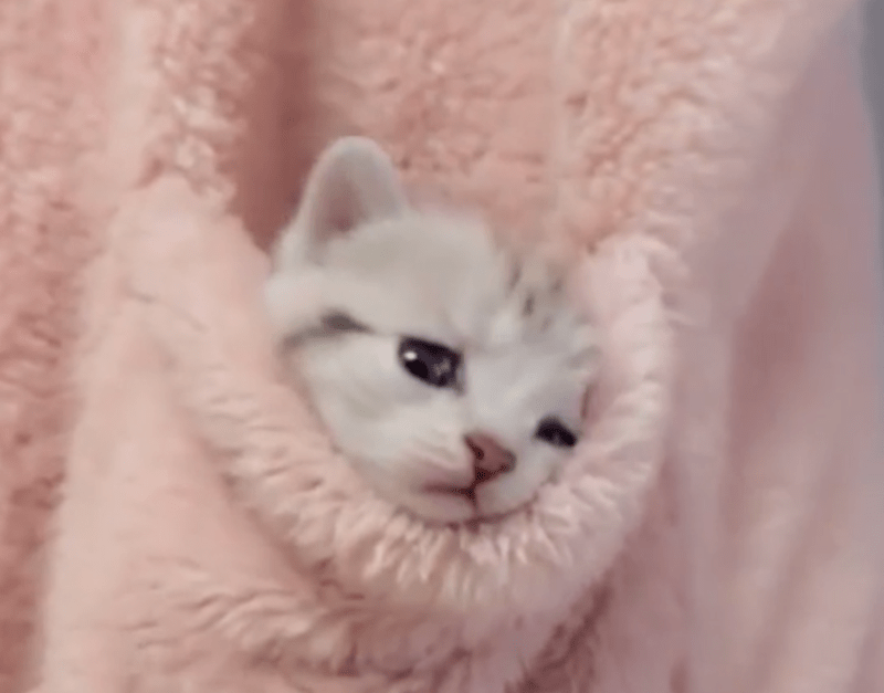 kitten snuggled inside a pink furry pocket