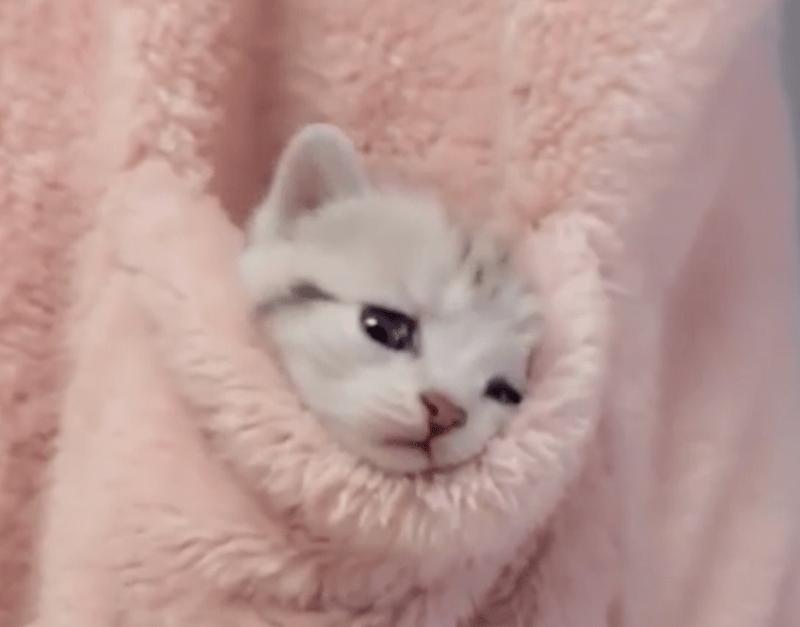 kitten snuggled inside a pink furry pocket