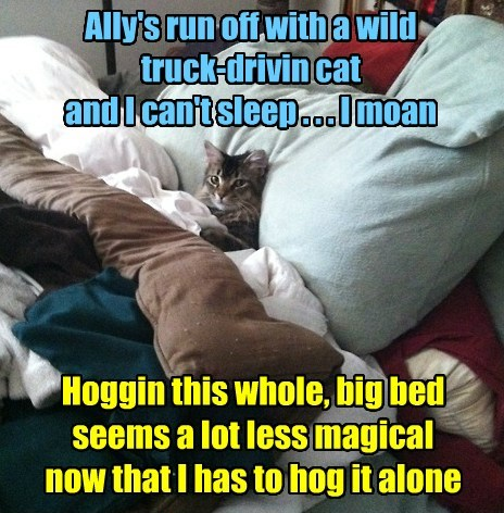 Ally's run off with a wild truck-drivin cat and I can't sleep . . . I moan Hoggin this whole, big bed seems a lot less magical now that I has to hog it alone