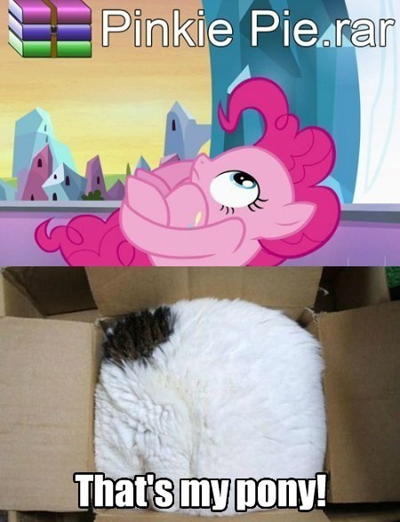 pinkie pie meme Cats - 7725838592