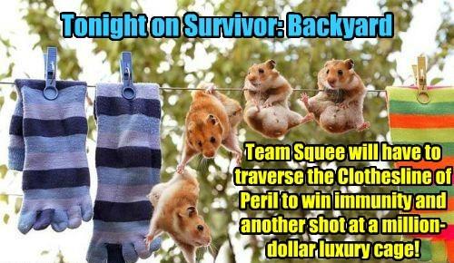 clothesline survivor squee funny - 7725845760