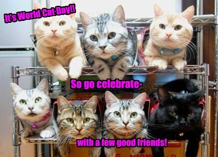 world cat day,cute,Party