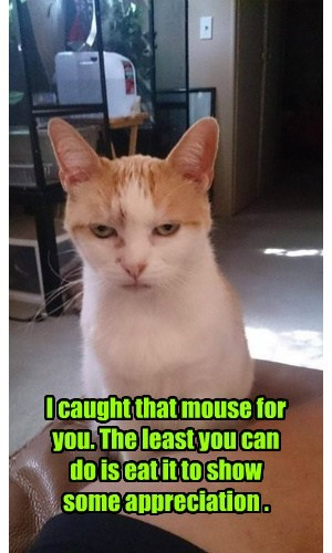 I caught that mouse for you. The least you can  do is eat it to show  some appreciation .