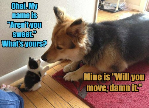 """Ohai. My name is """"Aren't you sweet."""" What's yours? Mine is """"Will you move, damn it."""""""