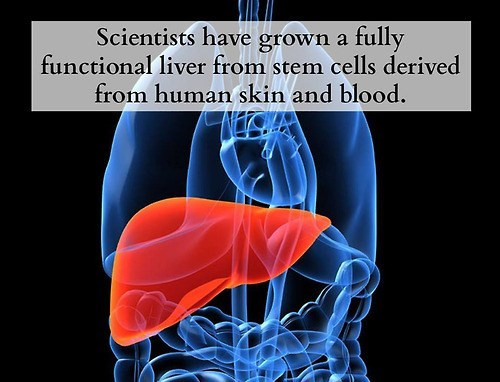 liver stem cells scientists funny