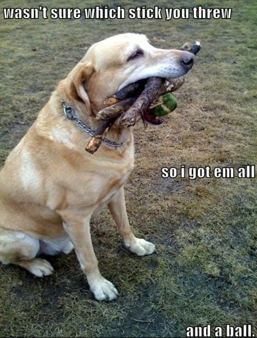 fetch,funny,sticks