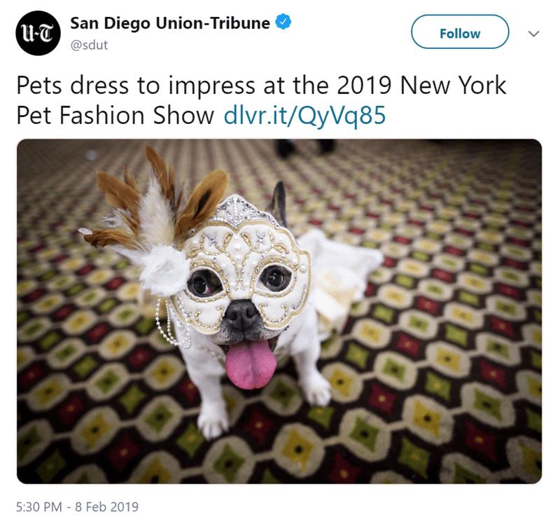 dogs fashion fashion week pets new york - 7726597