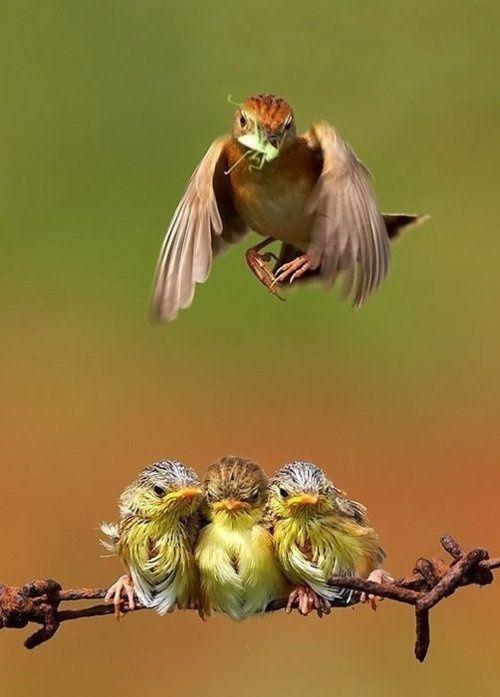 baby birds - 7726637056