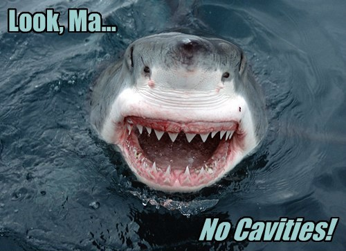 cavity teeth shark funny - 7726715648