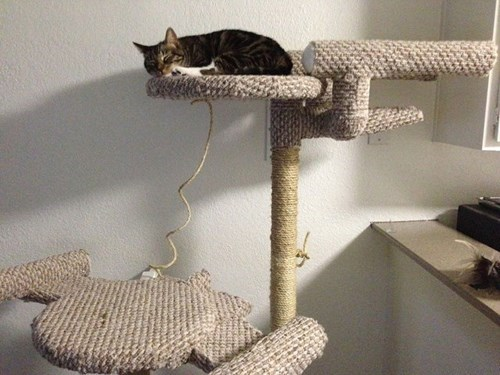 nerdgasm cat fort Star Trek Cats g rated win - 7726718208