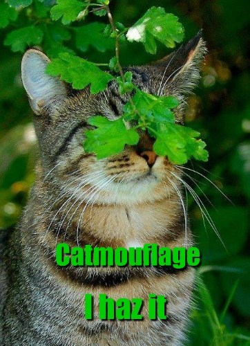 blind,camouflage,funny