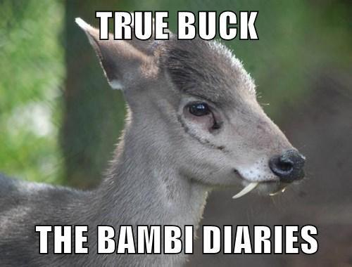 TRUE BUCK THE BAMBI DIARIES