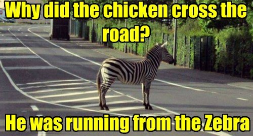zebra,chicken,joke,funny