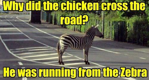zebra chicken joke funny - 7727681280