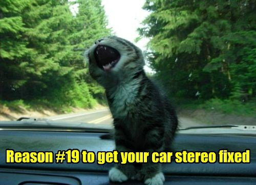 radio cat singing stereo funny - 7727728384
