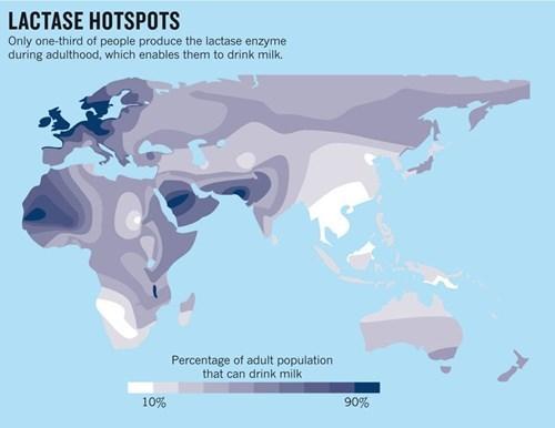 lactose intolerant,heat map,dairy,lactase
