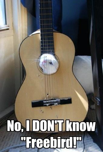 guitar freebird funny - 7728128000