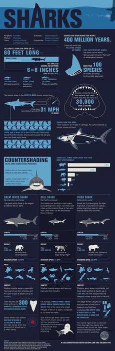 oceanography Predator shark week mystery science - 7728134144