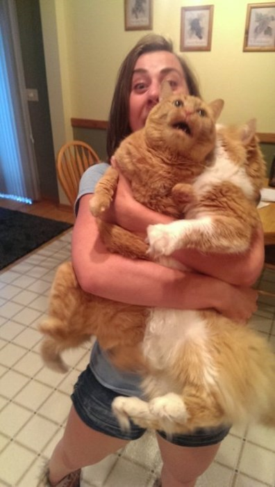 holding Cats funny - 7728453888