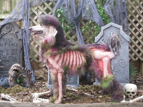 dogs wtf poodles haircuts zombie funny - 7728462592