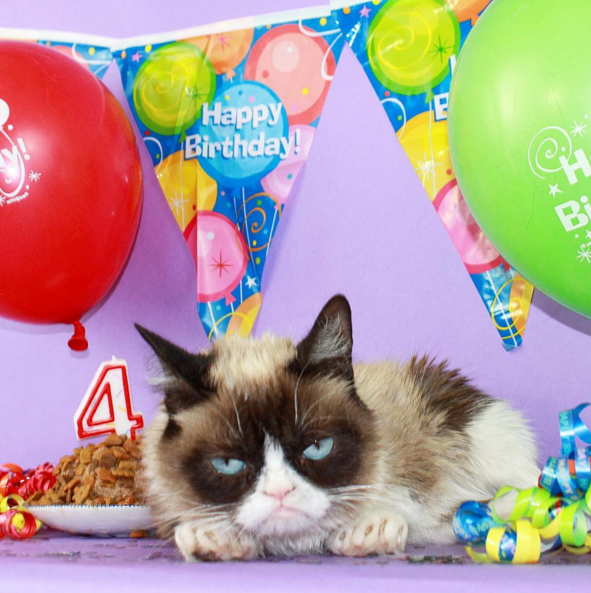 Grumpy Cat,birthday,Cats