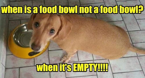 food bowl cute funny