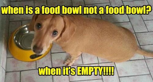 food bowl cute funny - 7729517568