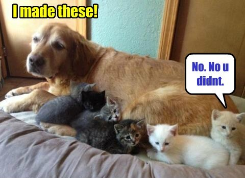 dogs,i made these,mom,Cats,funny