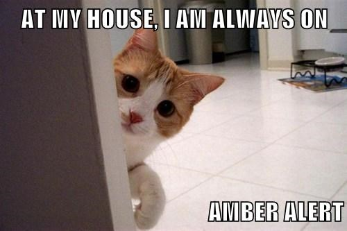 At My House I Am Always On Amber Alert Lolcats Lol Cat