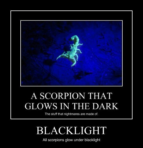 scary,scorpions,blacklight,funny