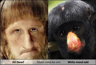dwarf,white-nosed saki,The Hobbit,totally looks like,ori,funny