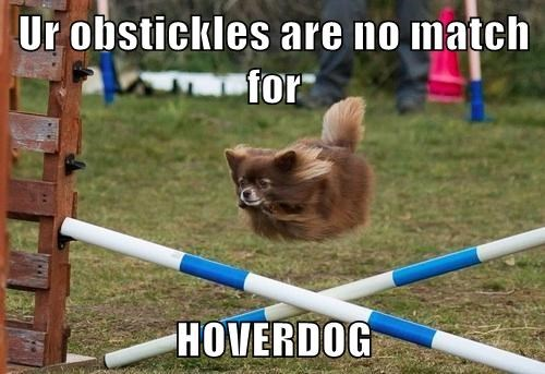 hoverdog zoom funny