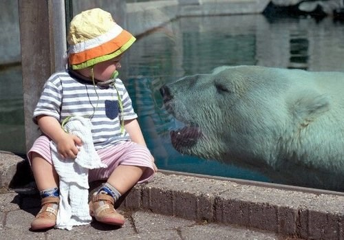 Babies,polar bear,cute,parenting,animals