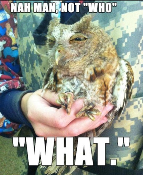 philosophy,Owl,animals