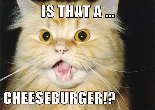 Cheezburger Image 7732689152