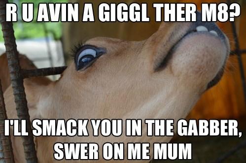 mum gabber funny - 7732715008