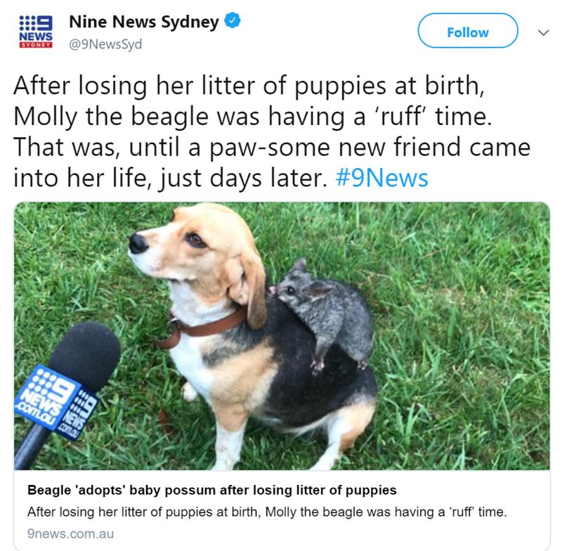 friendship dogs possom beagle - 7732741