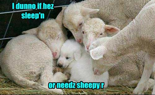 I dunno if hez sleep'n or needz sheepy r
