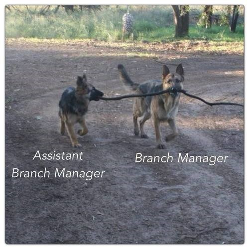 working branch managers funny - 7732851712