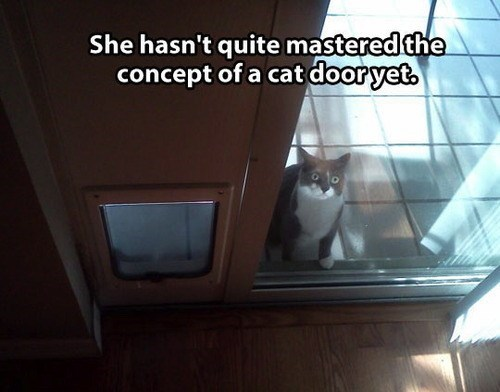 cat door inside bright funny