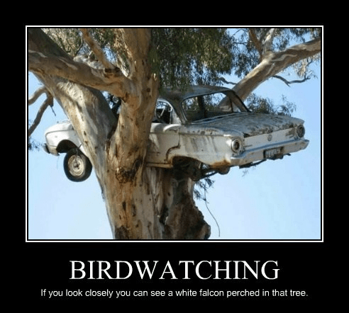 elegant bird watching funny - 7732971776