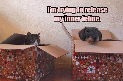 dogs box feline Cats funny - 7732985856