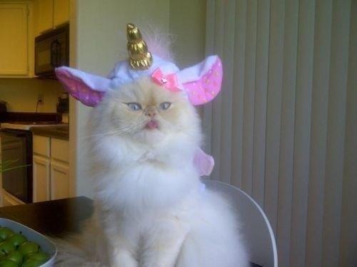unicorn majestic funny - 7733230592