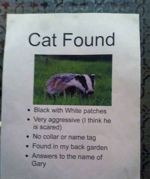 cat found,Lost Cat